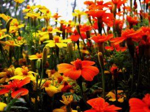 in-the-garden-2-1391418