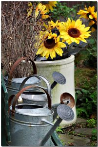 watering-cans-1570444